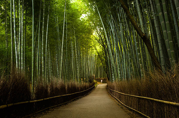 bamboo path near Arashiyama region