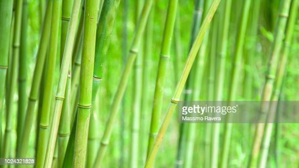 bamboo. - bamboo material stock photos and pictures