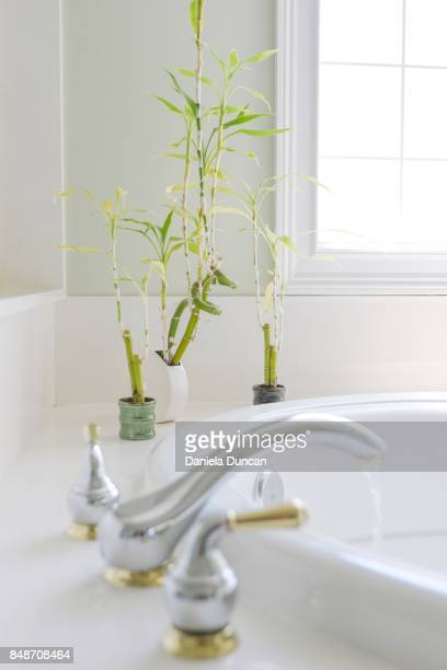 bamboo plants in the bathroom - bamboo plant stock photos and pictures