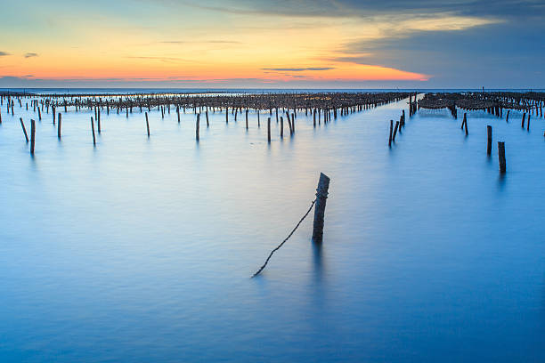 Bamboo poles and rope in oyster farm