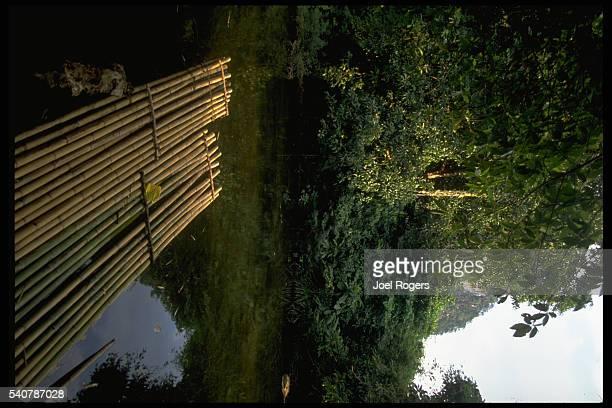 Bamboo Raft on Jungle River
