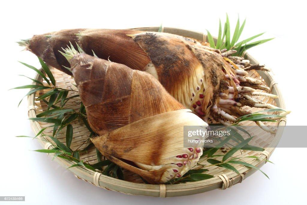 Bamboo Shoot : Stock Photo