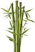 Bamboo Sparkler