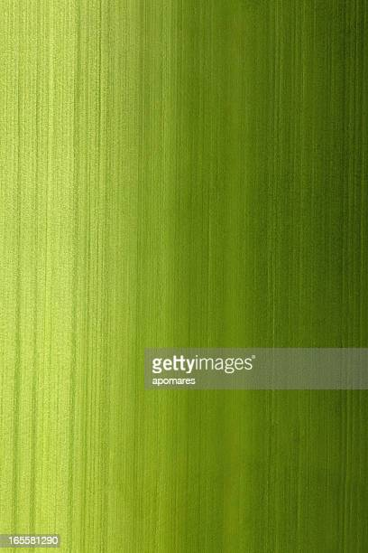 Bamboo stalk surface texture with gradient natural lighting