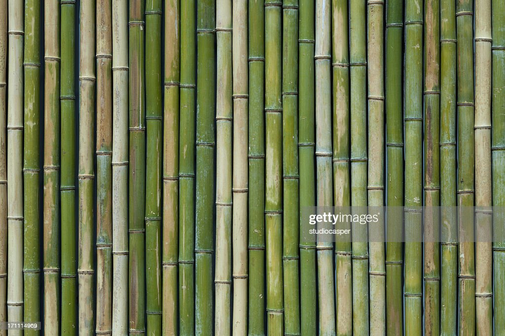 Bamboo texture : Stock Photo