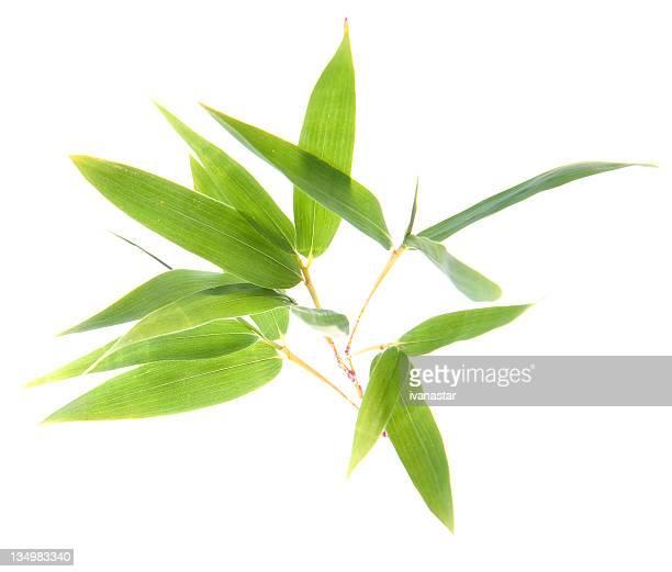 """Bambus Twigs'und Blätter"""""""