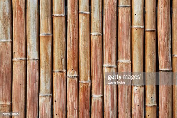 Bamboo wall, Tokyo, Japan
