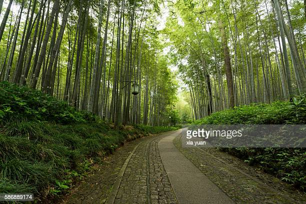 Bamboo-Lined Path at Yunqi,Hangzhou,China