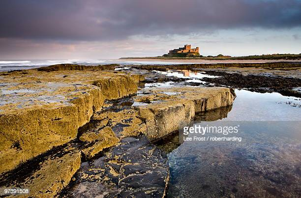 Bamburgh Castle bathed in evening light with foreground of barnacle-encrusted rocks and rock pools, Bamburgh, Northumberland, England, United Kingdom, Europe