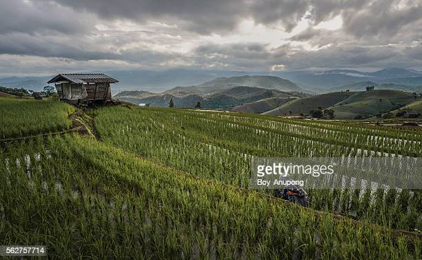 Ban Pa Pong Piang rice terraces field in Chiangmai province of Thailand.