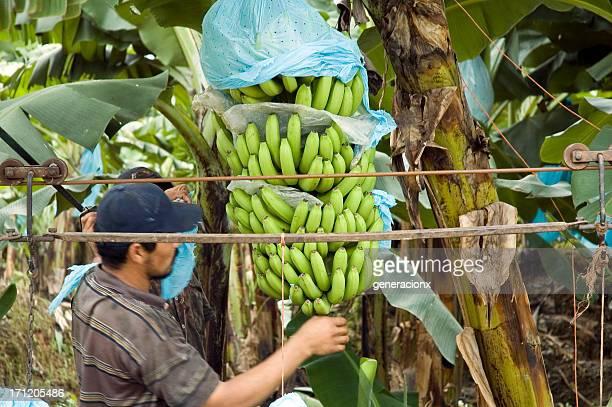 Bananen Bund