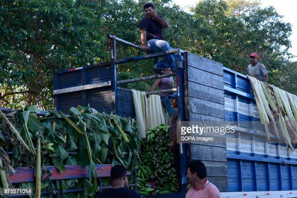 Banana famers seen loading a truck in Moyogalpa Although Nicaragua struggled to recover from the devastation caused by the civil war of the 1980s in...