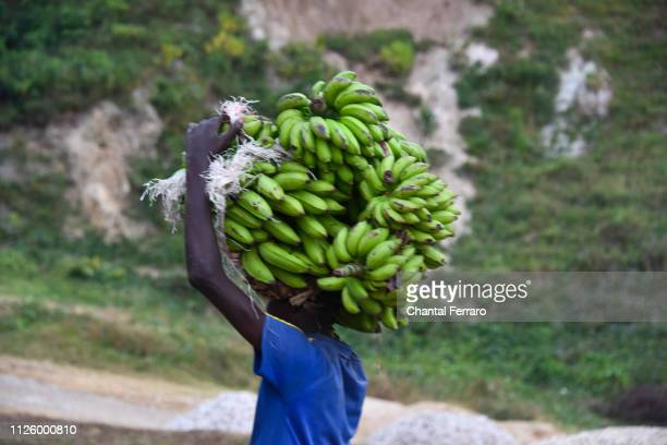 banana farmer in rwanda - rwanda stock pictures, royalty-free photos & images