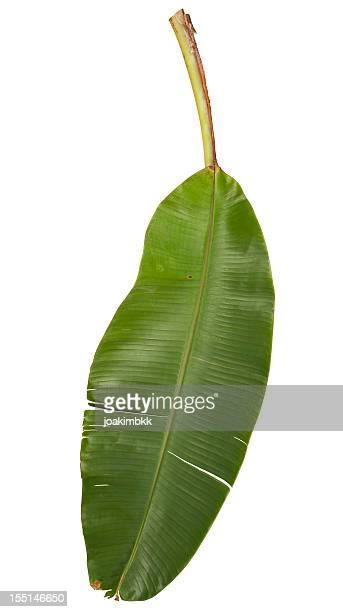 Banana leaf isolated on white with clipping path
