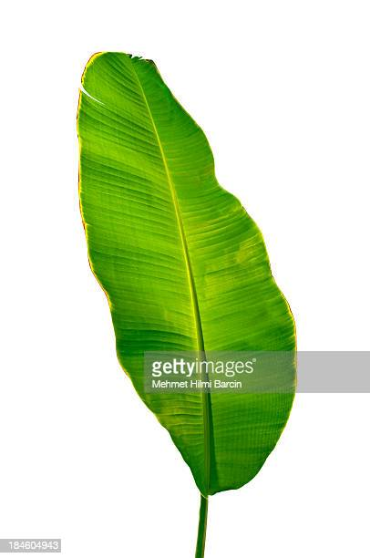 banana leaf - banana tree stock pictures, royalty-free photos & images