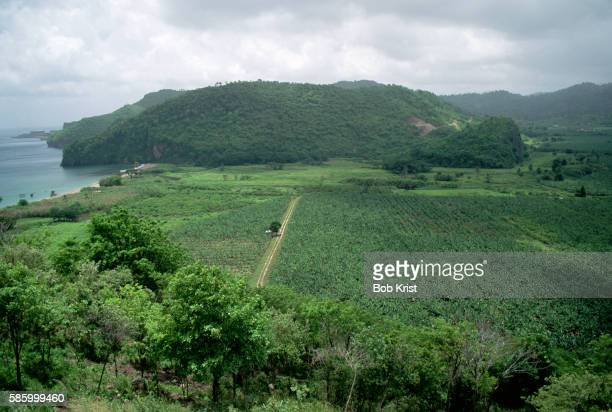 Banana Plantation on Saint Lucia