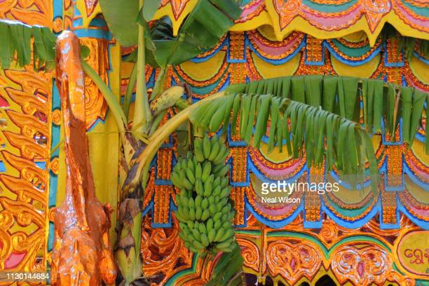 banana tree - banana tree stock pictures, royalty-free photos & images