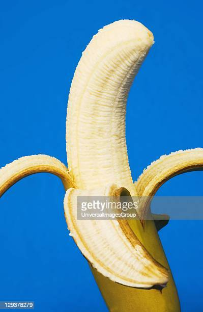 Banana with its skin peeled away against blue background Bananas are a valuable source of vitamin B6 vitamin C and potassium