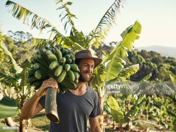 bananas are always in demand - banana tree stock pictures, royalty-free photos & images