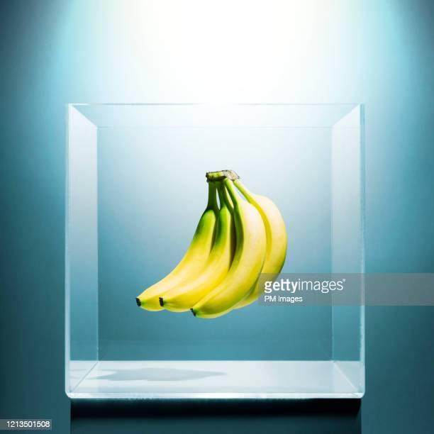 bananas in a clear box - molho arranjo imagens e fotografias de stock