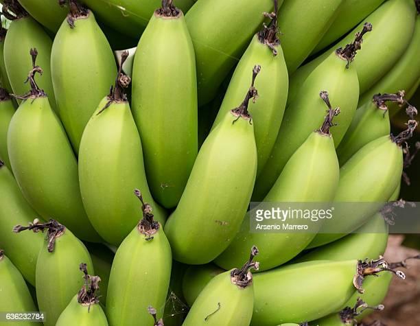 Bananas in Cape Verde