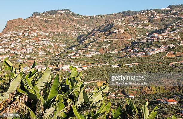 banane plantations - atlantic islands stock pictures, royalty-free photos & images