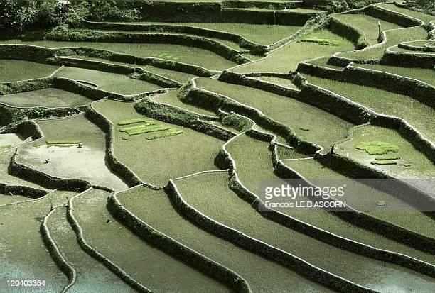 Banaue Philippines Rice paddies