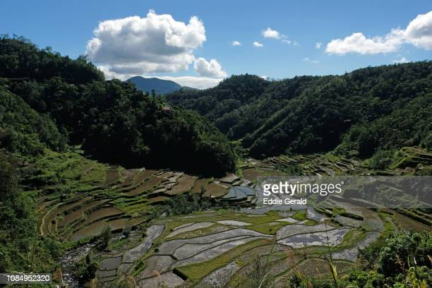 Banaue Rice Terraces in nthe Philippines
