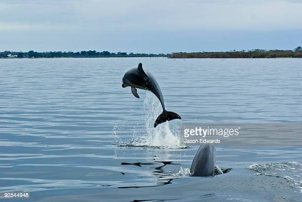 Bancroft Bay, Gippsland Lakes, Victoria, Australia.
