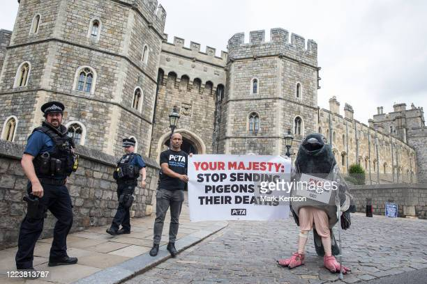 A bandaged giant pigeon on crutches is used by PETA activists to protest against pigeon racing outside Windsor Castle on 1st July 2020 in Windsor...