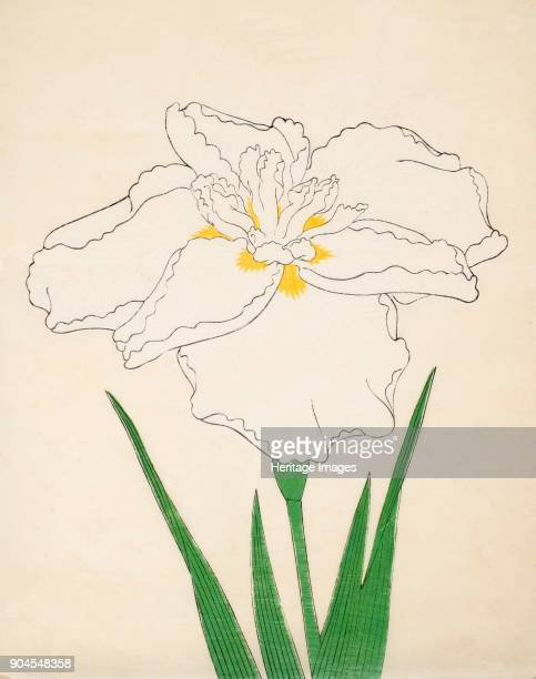 BandaiNoNami No 1 From the catalogue of The Yokohama Nursery Co Ltd of Seitaro Arai which specialised in Iris kaempferi Japanese Iris all native to...