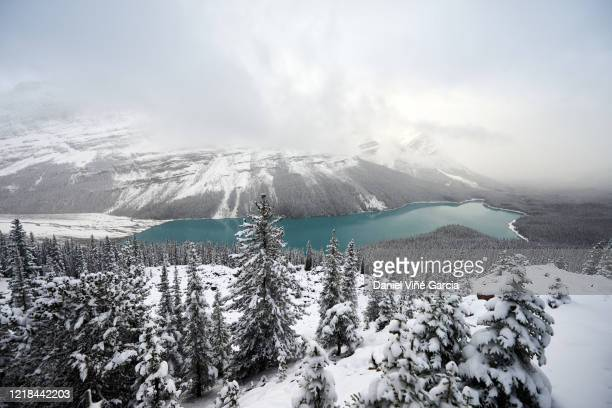 banff national park at sunset in winter - bow valley stock pictures, royalty-free photos & images