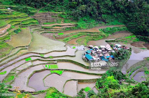 Bangaan rice terraces Bontoc Ifugao Province Luzon Philippines Southeast Asia