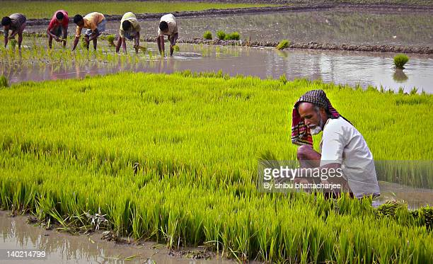 Bangladesh of Agriculture