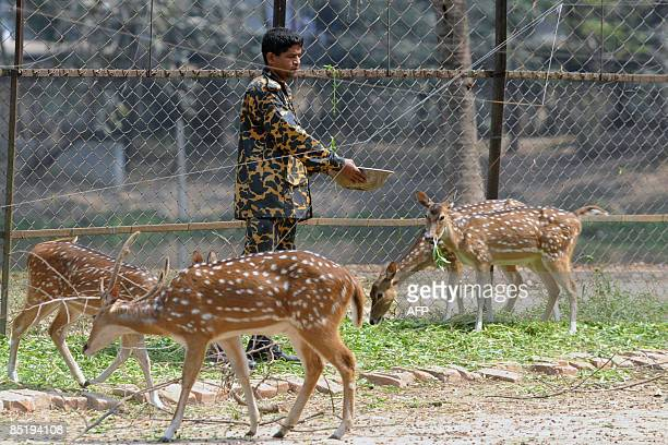 A Bangladesh Rifles soldier feeds deer kept in a pen on the compounds of the Bangladesh Rifles headquarters in Dhaka on March 3 2009 The Bangladesh...