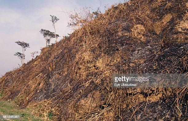 Bangladesh Sirmangal Slash and burn deforestation of hillside cleared for agriculture
