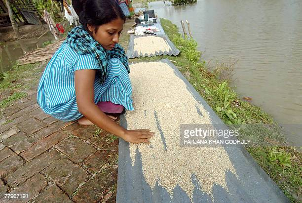 Bangladeshi cyclone-affected girl dries wet rice in a village in Rupsha on the south coast of Bangladesh, 18 November 2007. Bangladesh said the death...