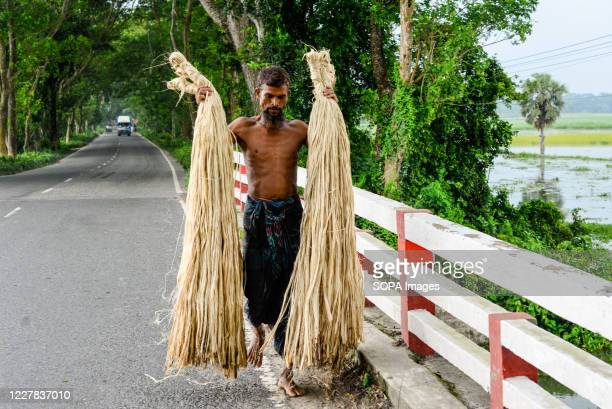 Bangladeshi farmer carries freshly harvested jute. Jute is Bangladesh's golden fiber and it plays a major role in the national economy. In...
