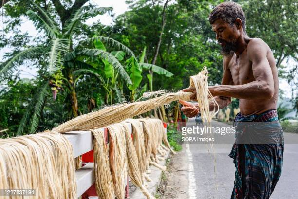 Bangladeshi farmer sets jute on a rack to dry. Jute is Bangladesh's golden fiber and it plays a major role in the national economy. In Bangladesh, 80...