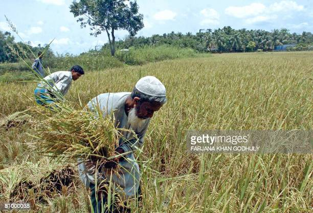 Bangladeshi farmers harvest rice in a field on the outskirts of Cox's Bazar on May 03 2008 The head of the Asian Development Bank has called for an...
