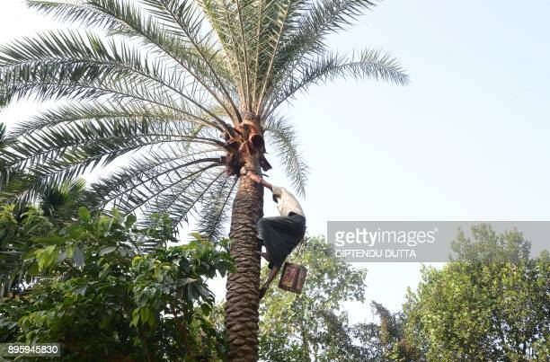 Bangladeshi labourer Rahim Sheikh collects a container filled with sap from a date palm tree dripped overnight in Dodhiabari village near Gajoldoba...