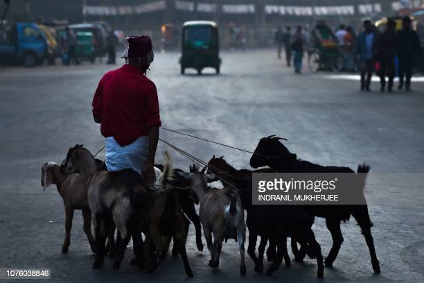 A Bangladeshi man walks with his goats purchased at a local market early morning in Dhaka on December 31 a day after the country's general election...