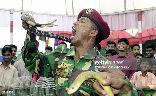 Bangladeshi paratrooper prepares to bite a snake during a public show during which soldiers demonstrated various wilderness survival skills at the...