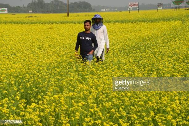Bangladeshi people walk in the mustard flower field in Munshigonj near Dhaka Bangladesh on January 04 2019 Mustard is a cool weather crop and is...