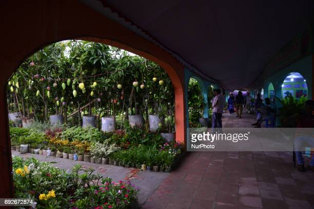 Bangladeshi peoples visits in the National Tree Fair at Agargaong in Dhaka Bangladesh on June 05 2017 Department of Forests and Ministry of...