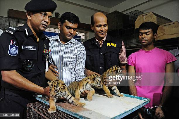 Bangladeshi Rapid Action Battalion personnel pictured with a detained smuggler in handcuffs pose with rescued Bengal tiger cubs in Dhaka on June 11...