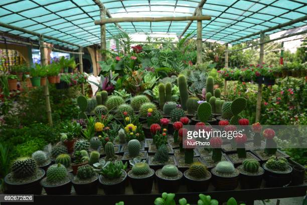 Bangladeshi tree seller displayed verity type cactus trees in the National Tree Fair at Agargaong in Dhaka Bangladesh on June 05 2017 Department of...
