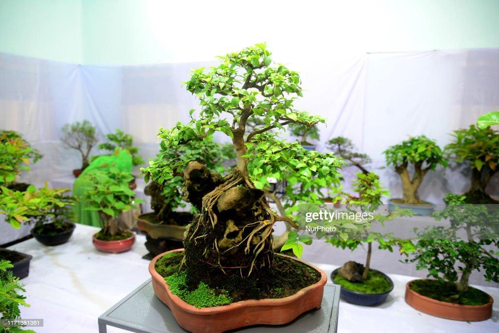 Bansai Trees Exhibition In Dhaka : ニュース写真