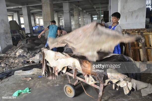 Bangladeshi workers sort through unprocessed leather at a tannery in Savar tannery industrial estate near Dhaka Bangladesh on April 9 2017 Tannery...