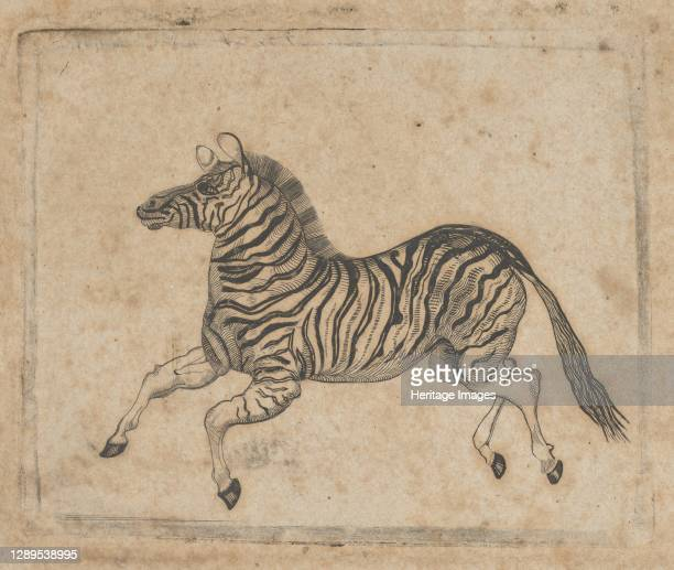 Banknote vignette showing a zebra, ca. 1824-37. Artist Attributed to Asher Brown Durand.